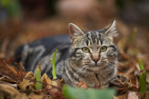 How to Make Your Own Natural Cats Repellant