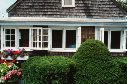 How to Save a Cedar Hedge