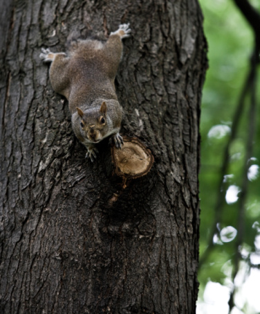 How Keep Squirrels From Chewing Wires