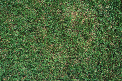 How to Take Care of Carpet Grass