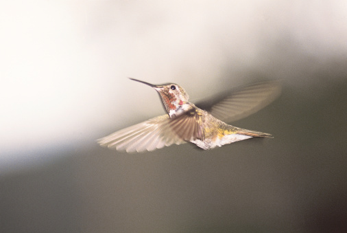When to Put Out Hummingbird Feeders in South Carolina?