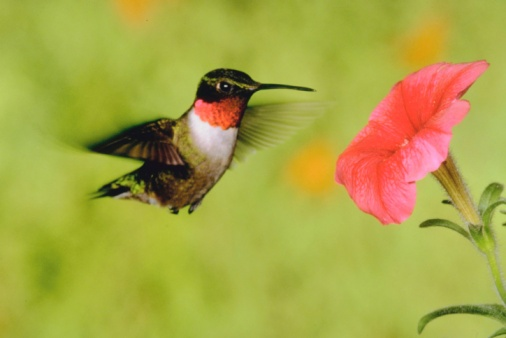 How to Make Your Own Hummingbird Feeder Tube