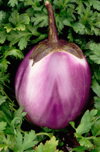 How to Prune Eggplants