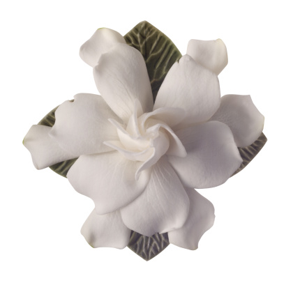 How to Preserve Fresh-Cut Gardenia