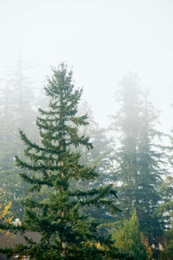 Facts About Evergreen Trees Hunker