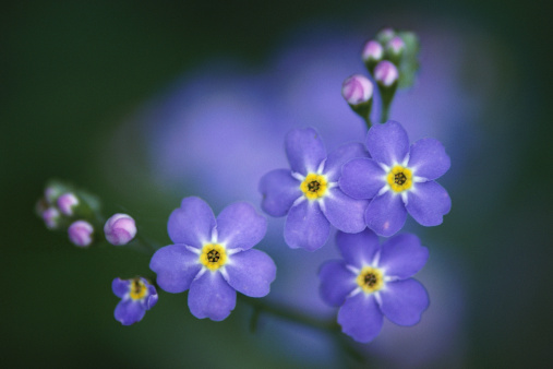 How to Prune Forget-Me-Nots