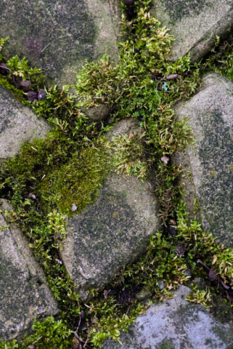 How To Clean Moss From A Brick Patio With Bleach | Hunker