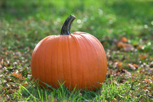 How to Tell If a Pumpkin Is Overripe?