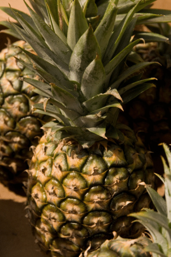 How to grow pineapple plants from pineapple tops hunker for Pineapple in the ground