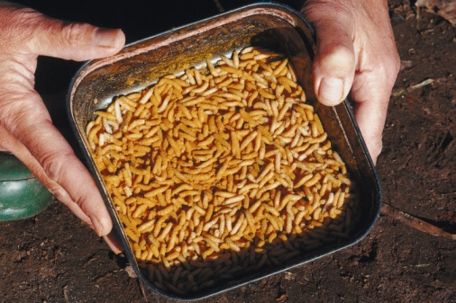 How Do Maggots Turn Into Flies?