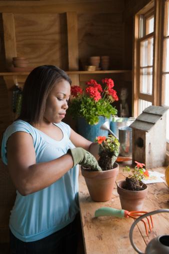 How To Grow A Sweet Potato Vine Indoors Hunker
