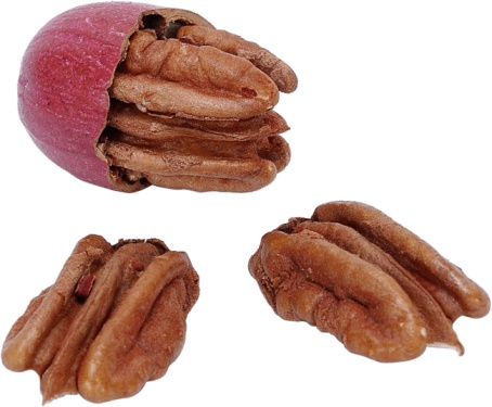 Why Does My Pecan Tree Produce Rotten Pecans?