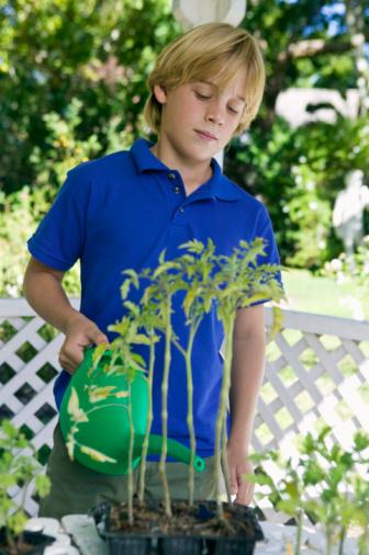 Which Liquids Do Seeds Grow Best In?