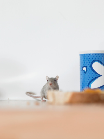 How to Stop Mice From Eating Through Electrical Wiring