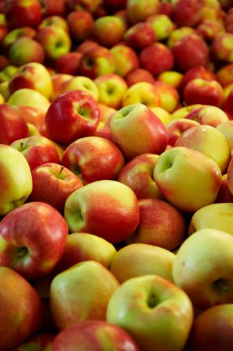 Do Gala Apple Trees Need a Pollinator?