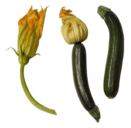 How to Identify Cucumbers, Squashes & Melons