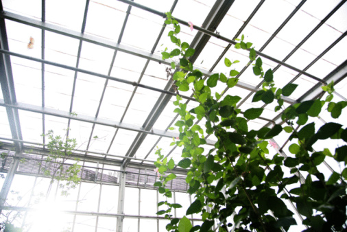 Advantages & Disadvantages of Greenhouse Farming