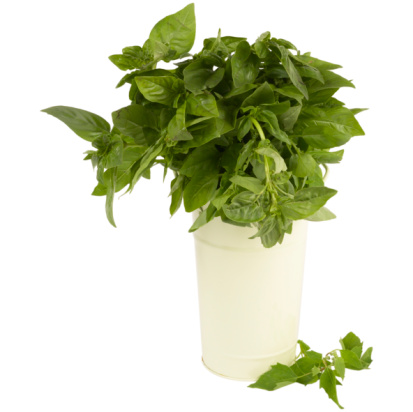 The Difference Between Basil & Holy Basil