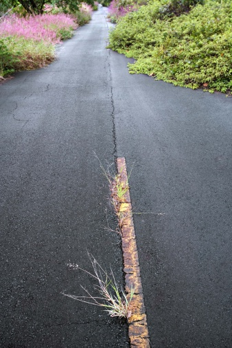How to Kill Weeds Growing Through Asphalt