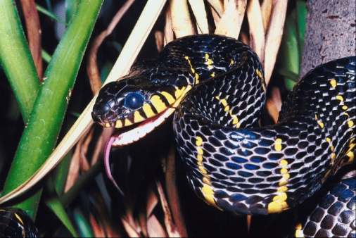 What Can I Put Around My House to Ward Off Snakes?
