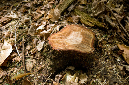 How to Kill a Tree Stump With Oil