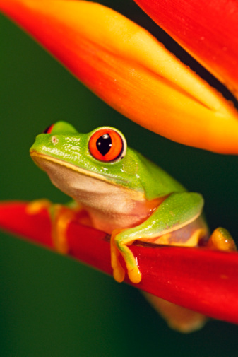 Are Frogs in the Garden Dangerous?