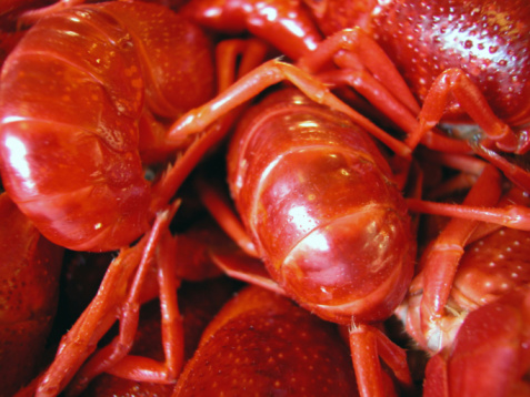 How to Get Rid of Crawdads in the Yard