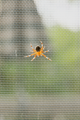 How to Use Oranges as a Spider Repellent