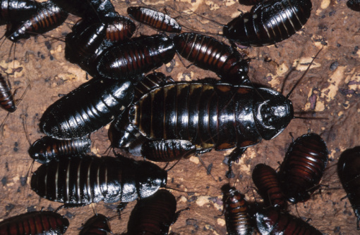 What Eats Cockroaches?