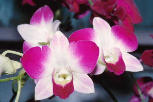 When Are Orchids in Season?