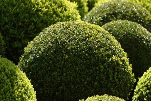 How to Trim a Round Bush