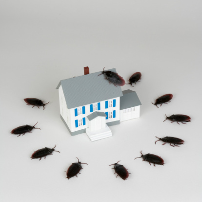 How to Use Electricity to Kill Cockroaches