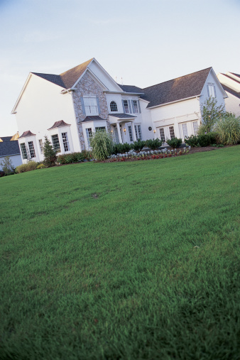 When to Spray the Lawn for Bugs