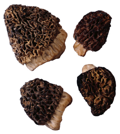 What is the Soil That Morel Mushrooms Grow In?