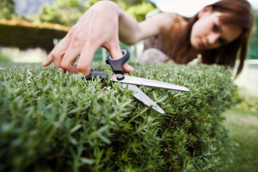 How to Keep Cut Irises Fresh