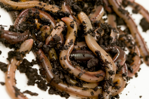 What Kills Earthworms?