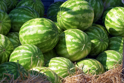 A Companion Plant for Watermelon