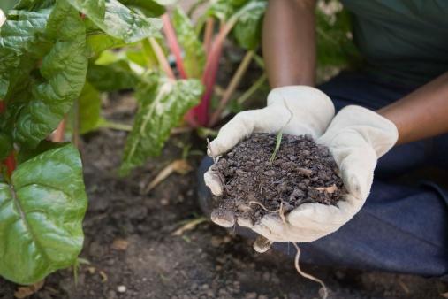 How Often Should You Change Potting Soil?