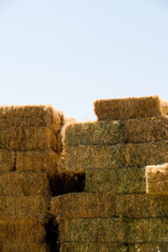 How to Get Rid of Wet Hay Bales