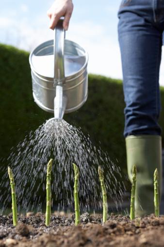 Will Listerine Harm Garden Plants?