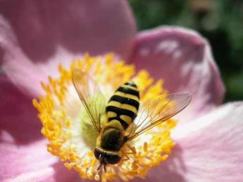 How to Get Rid of Bumble Bees in the Yard