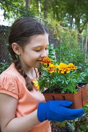 Can You Plant Marigolds in a Pot?