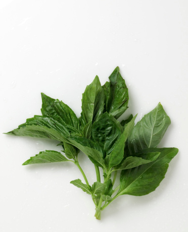 The Correct Way to Pick Basil Leaves