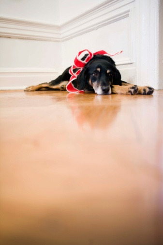 How to Disinfect Ringworm From Wood Floors