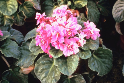 Can Potting Soil for an African Violet Be Used for Other Plants?