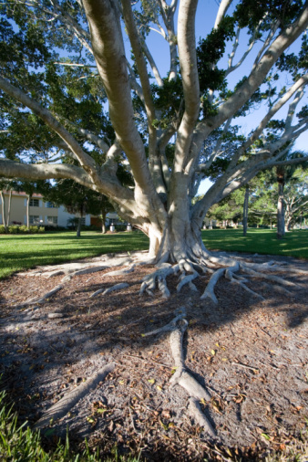 How to Grow Grass Where Tree Roots Are