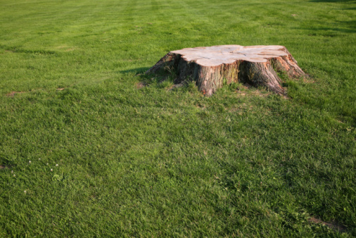 How to Plant Grass Where a Tree Stump Was