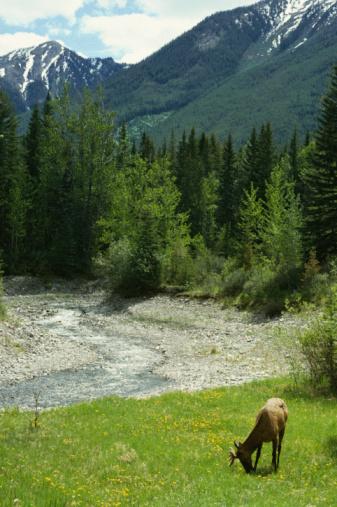 Is Canadian Hemlock Deer Resistant?