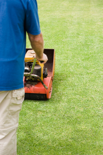 Should I Mow Grass Before Fertilizing?
