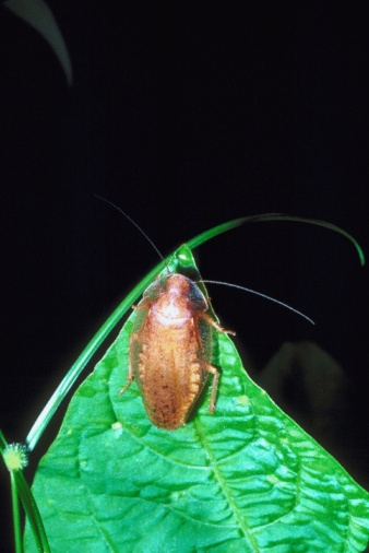 Plants That Attract Cockroaches